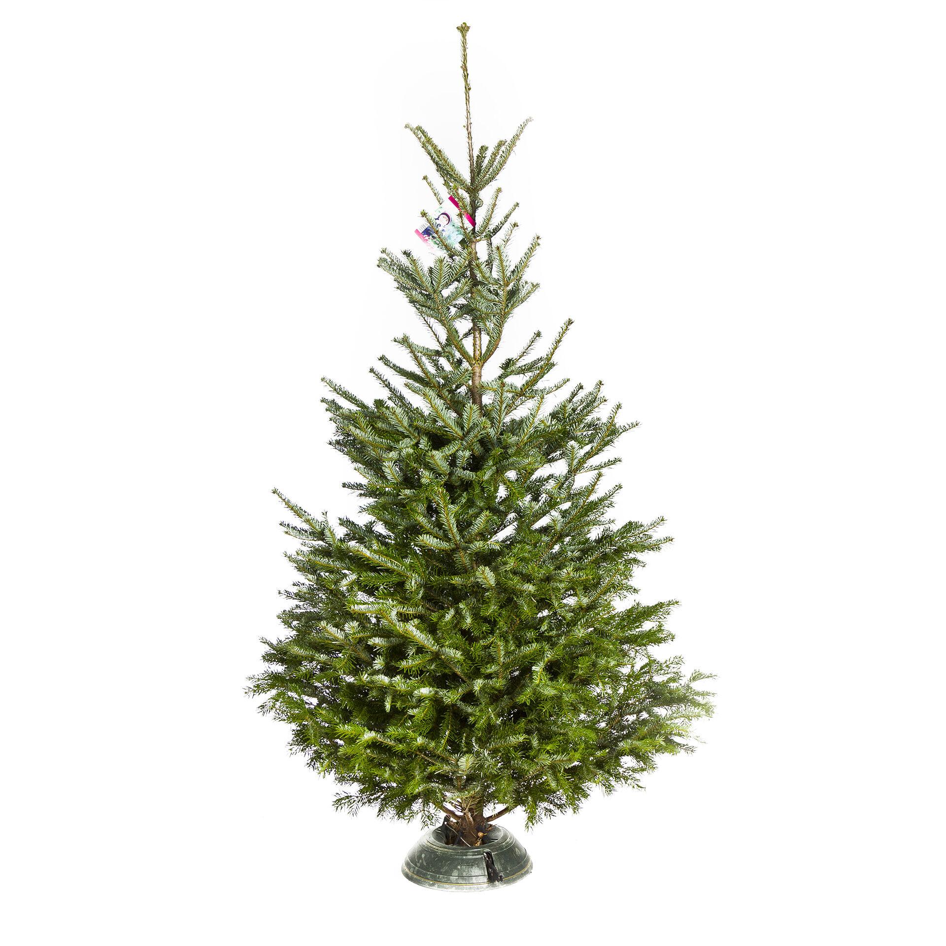 Bio Weihnachtsbaum Standard